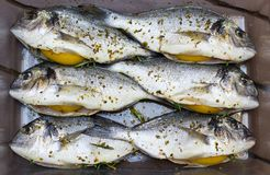 Gilt-head sea breams. Prepared to grill group of gilt-head sea breams with lemons, rosemary and olive oil royalty free stock photos