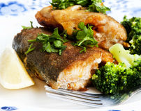 Prepared Trout with Broccoli Garnish Stock Photos