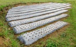 Prepari il suolo delle verdure Fotografia Stock Libera da Diritti