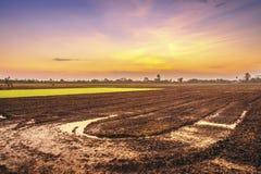 Prepari l'area di piantatura degli agricoltori del riso Immagini Stock