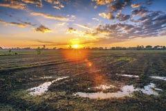 Prepari l'area di piantatura degli agricoltori del riso Fotografia Stock