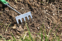 Prepari una barbabietola per la piantatura, rastrello piccolo nel suolo Fotografia Stock Libera da Diritti