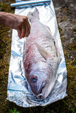 Preparing big dentex fish for barbecue cooking on picnic outside. Salting and wrapping a giant fish in aluminium foil, getting it ready for bbq grilling Stock Image