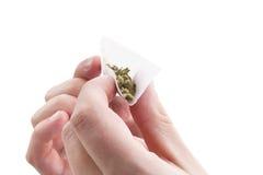 Preparing a cannabis joint. Stock Photos