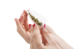 Preparing a cannabis joint. Hands isolated on white background rolling a cannabis joint. Smoking marijuana addiction. Feminine drug abuse royalty free stock images
