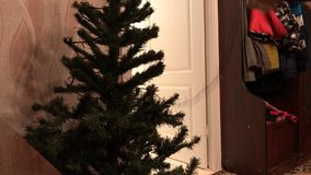 Preparing the Christmas tree for the holiday time lapse video. Decorating the Christmas tree stock video footage
