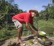 Preparing coconut Royalty Free Stock Photo