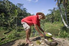 Preparing coconut Stock Photos