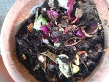 Preparing compost in a clay pot. Using kitchen waste to prepare compost at home Stock Photo