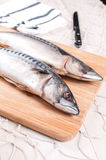 Preparing for cutting mackerel fish Royalty Free Stock Image