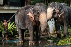 Sri lanka elephants stock photography