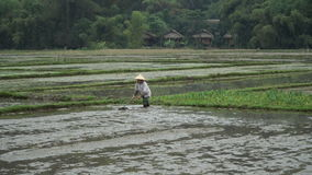 Preparing the field for planting rice stock footage