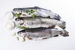 Preparing Fish for a Meal. Fresh fish being prepared for dinner with herbs next to them on white background Royalty Free Stock Photography