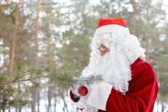 Preparing forest for Christmas Royalty Free Stock Photography