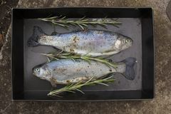 Preparing fresh fish trout on grill, rosemary branches between Stock Images