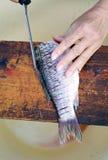 Preparing fresh fish Stock Image