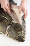 Preparing fresh turbot. Chef's hands cutting a fresh turbot Stock Photos