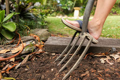 Preparing the garden for planting in spring. Garden maintenance jobs to get the garden ready to plant new plants in spring. Digging the soild with a garden fork Stock Photo