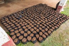 Preparing garden pots. Royalty Free Stock Photos