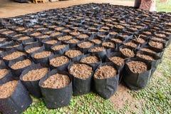 Preparing garden pots. Stock Photos