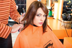 Preparing hair for cutting royalty free stock image