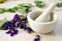 Preparing Herbal Dwarf Iris Royalty Free Stock Photo