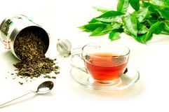 Preparing a herbal tisane Stock Photography