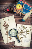 Preparing herbarium biology at a lesson Stock Images