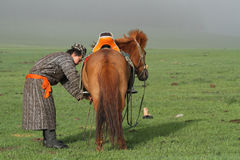 Preparing his horse at dawn Stock Image