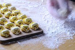 Preparing homemade tortellini. Stock Photography