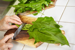 Preparing Japanese spinach sauted Stock Photography