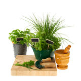 Preparing kitchen herbs Stock Images