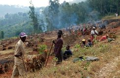 Preparing the land for agriculture, Uganda Royalty Free Stock Image