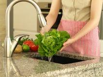 Preparing lettuce Stock Photos
