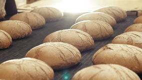 Preparing loafs of wheat bread on conveyer in bakery. Full HD stock video