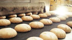 Preparing loafs of wheat bread on conveyer in bakery 4K.  stock video