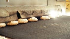Preparing loafs of wheat bread on conveyer in bakery 4K.  stock video footage