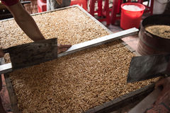Preparing Local Foods Stock Photo