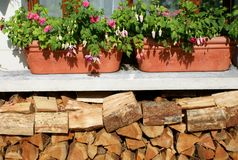 Preparing logs for winter Royalty Free Stock Image