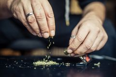 Preparing marijuana cannabis joint. Drugs narcotic concept. Close up Royalty Free Stock Photo