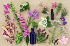 Preparing Medicinal Flowers and Herbs stock photo