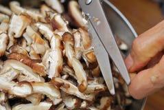 Preparing mushrooms for cooking Stock Photo