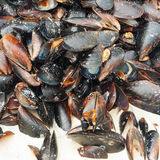 Preparing mussles close-up Royalty Free Stock Image