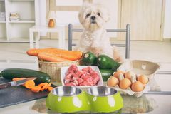 Preparing natural food for pets royalty free stock photography