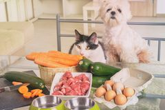 Preparing natural food for pets royalty free stock photos