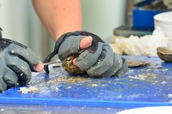 Preparing Oysters with sharp knife Royalty Free Stock Images
