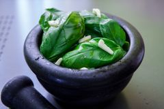 Preparing pesto sauce. Green basil leaves on a black mortar for make pesto Royalty Free Stock Image