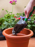 Preparing a pot for transplanting a plant Stock Photos