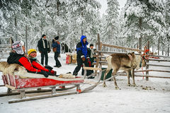 Preparing for the racing on the reindeer sledges Royalty Free Stock Photo
