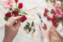 Preparing red roses Stock Photo